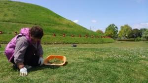 草取り作業中。