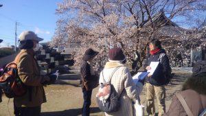興禅寺にて。四季桜が満開でした。